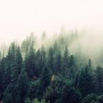 La inteligencia naturalista: Recursos